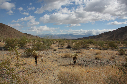 2011_2_Deep_Canyon_deep_canyon_reserve