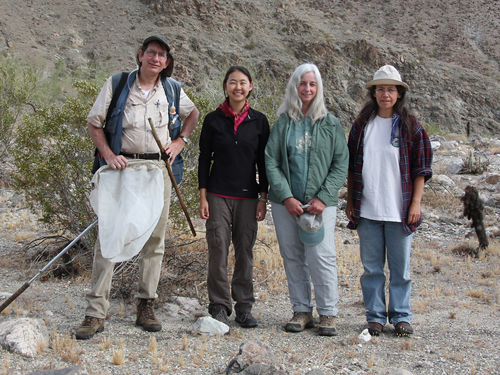 Participants from the 2011 collecting trip to Boyd Deep Canyon Reserve, Riverside Co. (left to right) Bob Zuparko, April Yang, Cheryl Barr and Joyce Gross