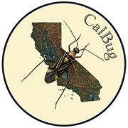 CalBug_Logo_72_dpi_small