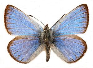 SilveryBlue