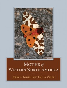 moths_wna