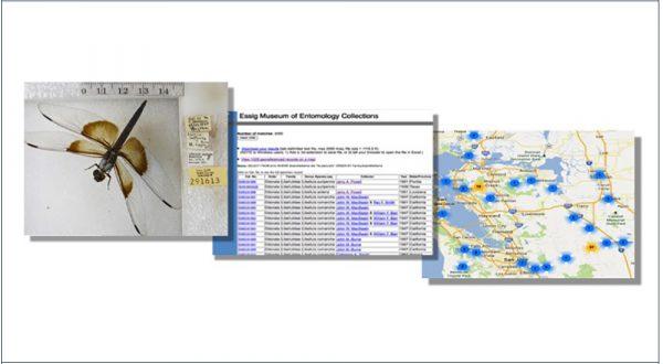 Holdings & Databases