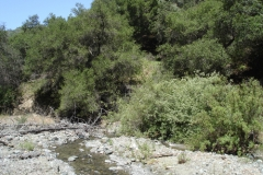 2006-sedgwick-Figueroa-Creek