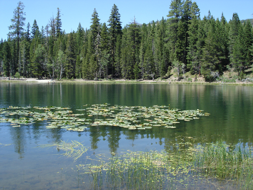 2007-Warner-MTS-Lily-Lake