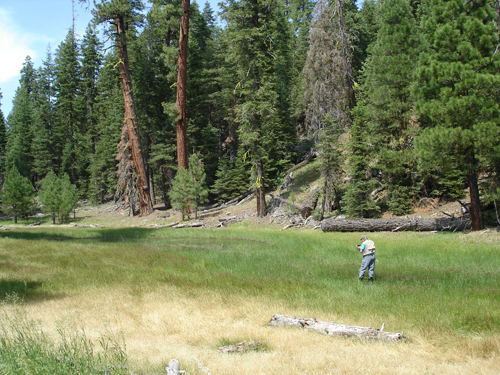 2007-Warner-MTS-pond-near-SF-Pine-Cr